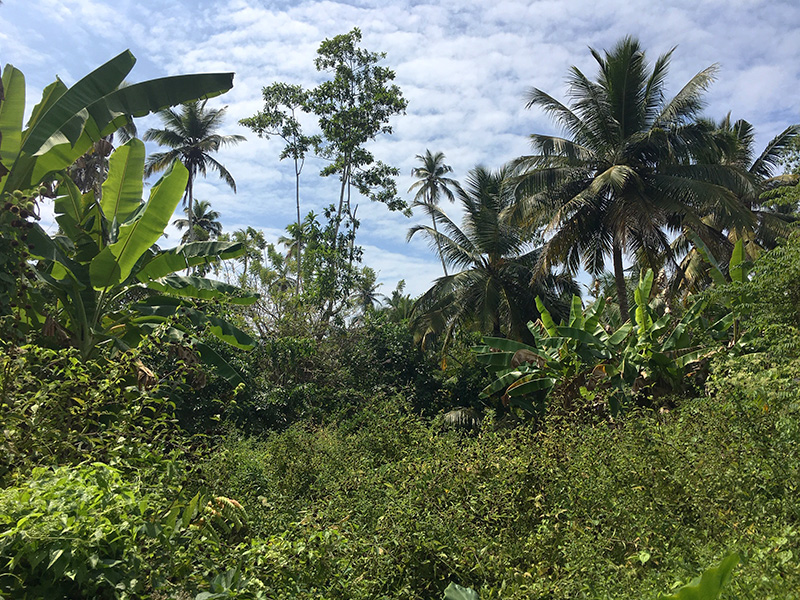 Jungle Plot Close To The Beaches Of Ahangama